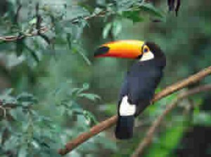 Optimisation_toucan_30_17kb